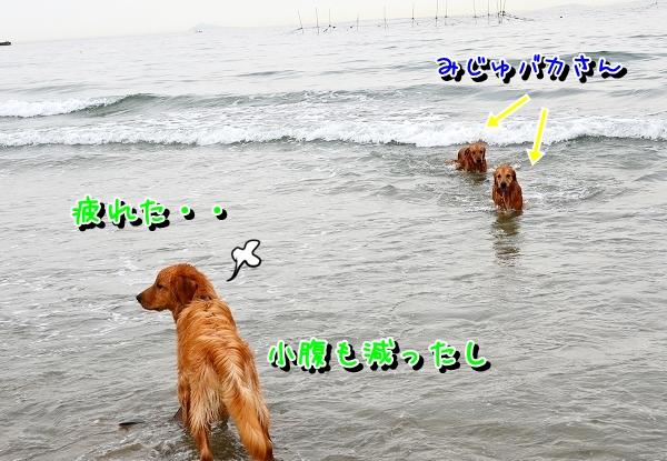 DSC_1721.jpg