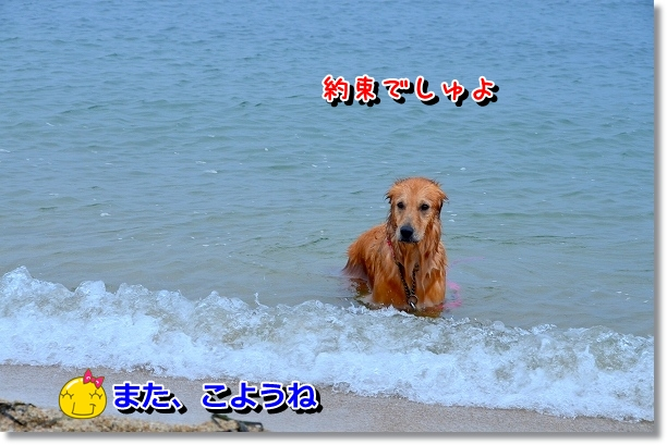 DSC_2394.jpg