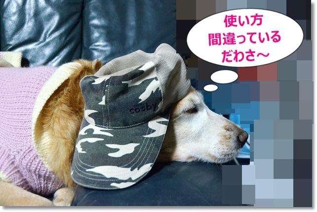 DSC_2399_20121230201145.jpg