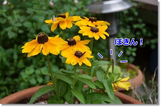 DSC_2539.jpg