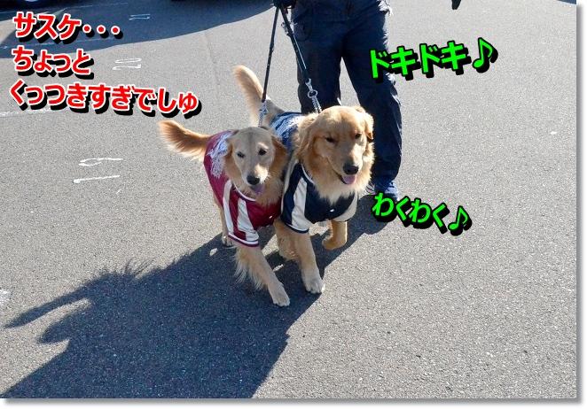 DSC_2610_20121217014719.jpg