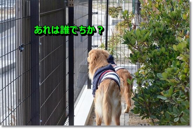 DSC_2664_20121219001748.jpg