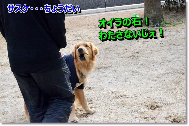 DSC_2713_20121219001820.jpg