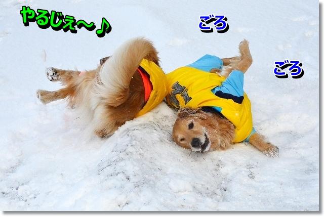 DSC_3315_20121225115244.jpg