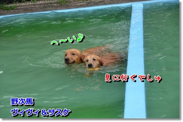 DSC_3353.jpg