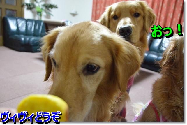 DSC_3710_20121227225128.jpg