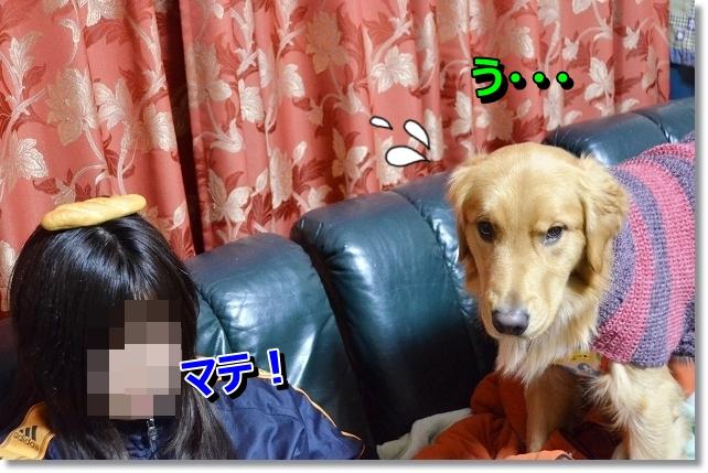 DSC_3716.jpg
