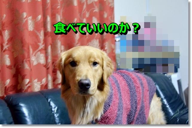 DSC_3718_20121227225153.jpg