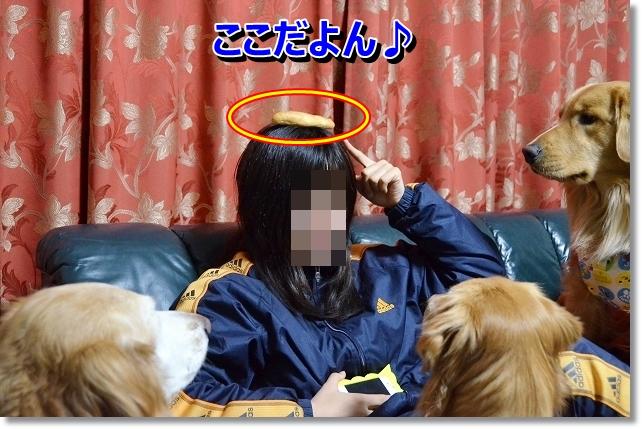 DSC_3720_20121227225155.jpg