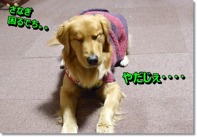 DSC_3771_20130103152115.jpg