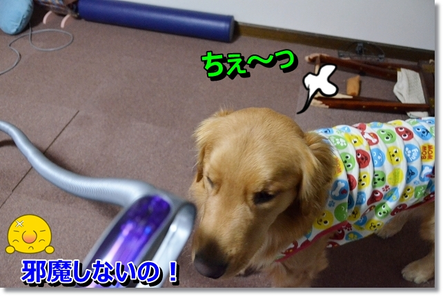 DSC_3777_20121230191741.jpg