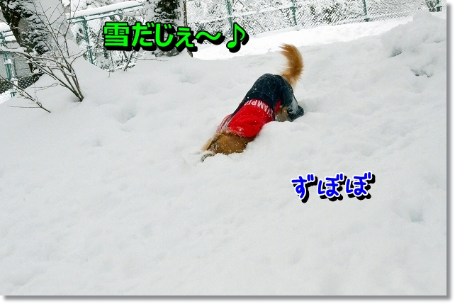 DSC_3992.jpg