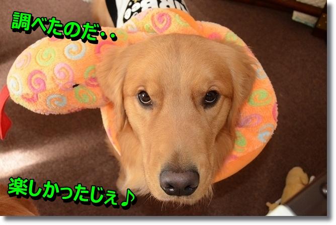 DSC_4460.jpg