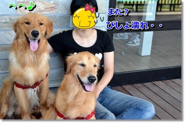 DSC_5333.jpg