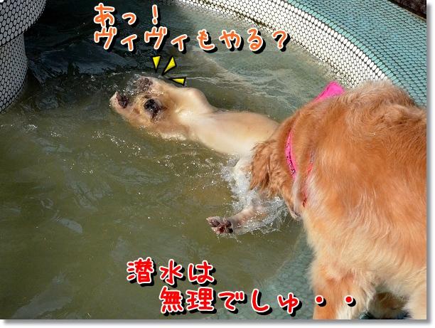 DSC_5877.jpg