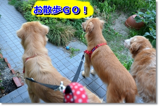DSC_6002.jpg