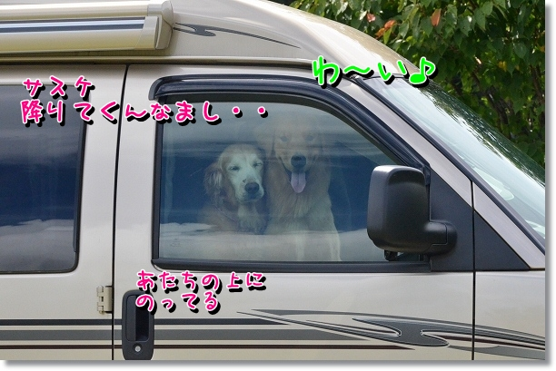 DSC_6077.jpg