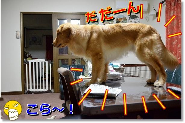 DSC_6701.jpg