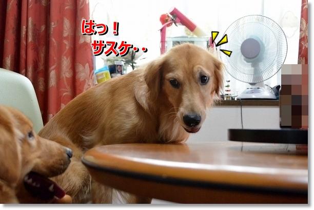 DSC_6708.jpg
