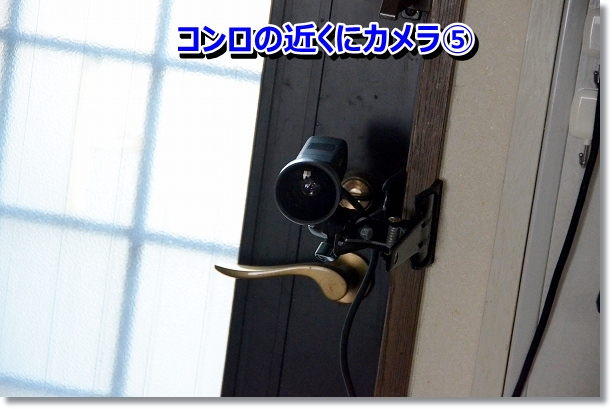 DSC_6804.jpg