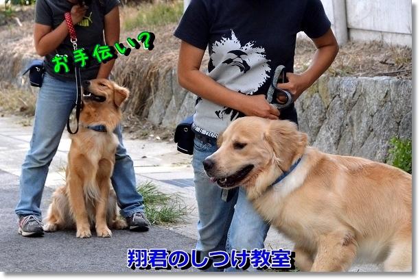 DSC_6998.jpg