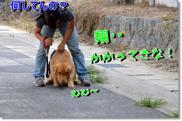DSC_7001.jpg