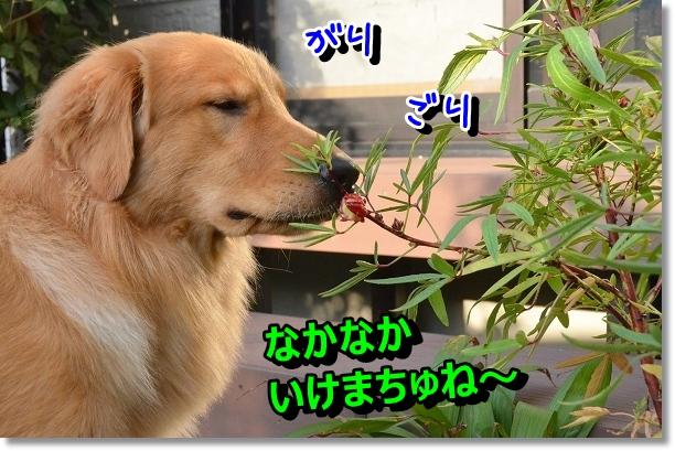 DSC_7406.jpg