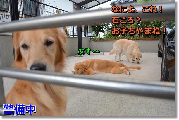 DSC_7442.jpg