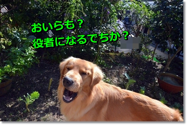 DSC_7767.jpg