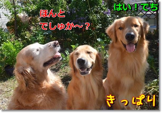 DSC_7778.jpg