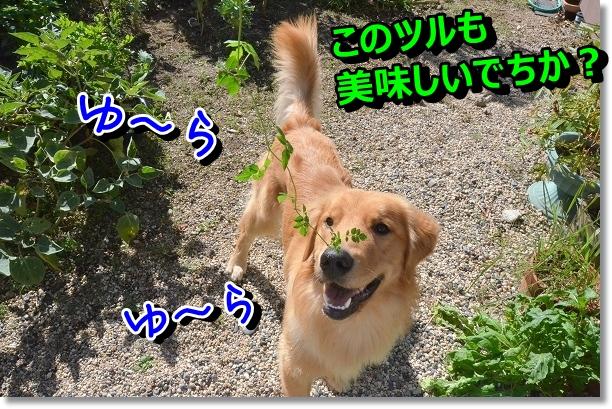 DSC_7794.jpg