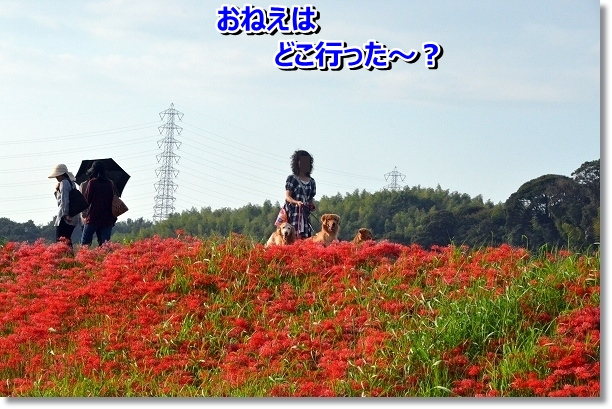 DSC_7872.jpg