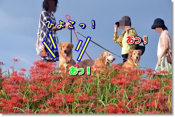 DSC_7878.jpg