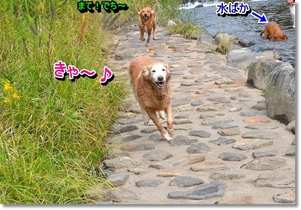 DSC_8040.jpg