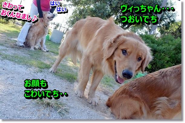 DSC_8528.jpg
