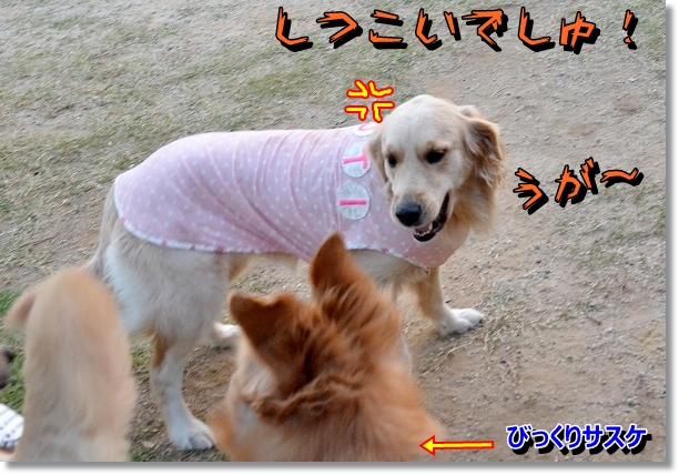 DSC_8633.jpg