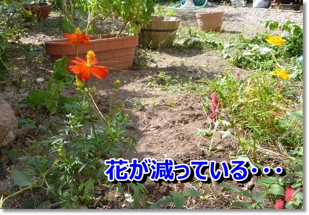 DSC_8692.jpg