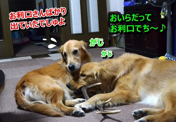 DSC_8874.jpg