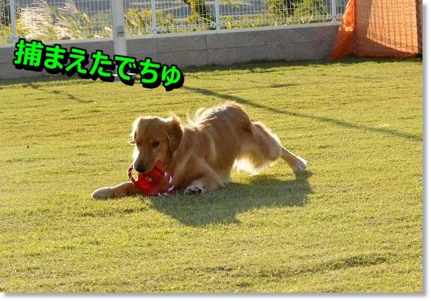DSC_9031.jpg