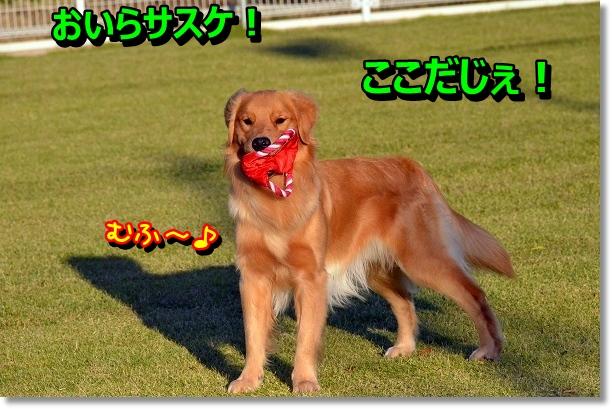 DSC_9100.jpg