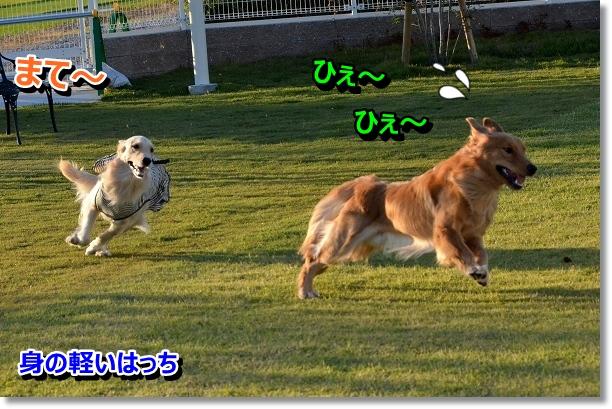 DSC_9114.jpg