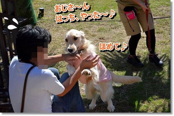 DSC_9600_20121102211547.jpg