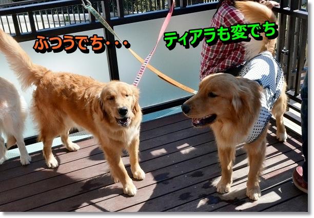 DSC_9661_20121102211716.jpg