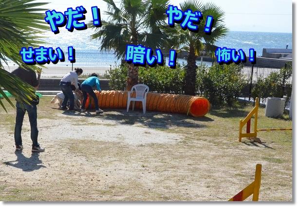 DSC_9734_20121102211625.jpg