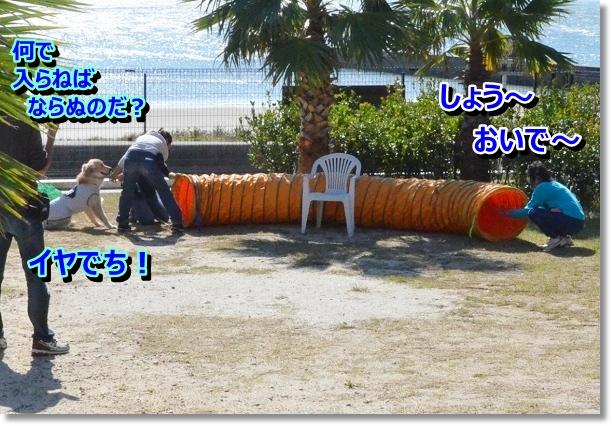 DSC_9736_20121102211624.jpg