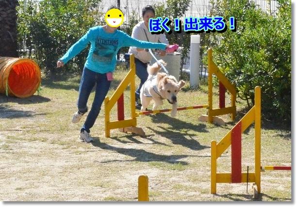 DSC_9738_20121102211624.jpg