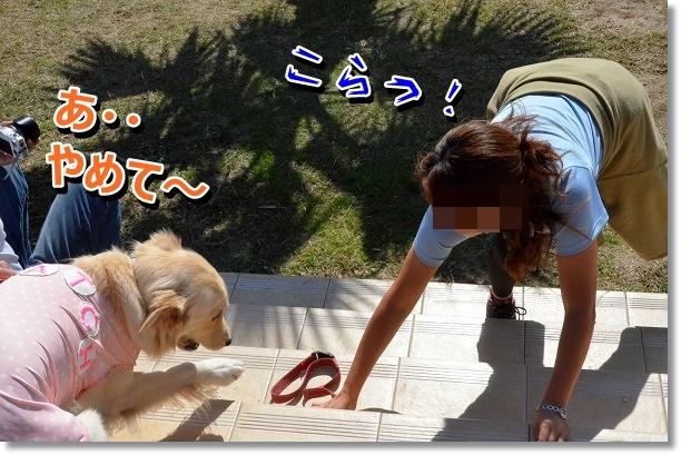 DSC_9753_20121102211545.jpg