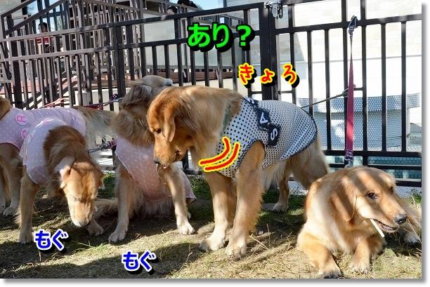 DSC_9895.jpg