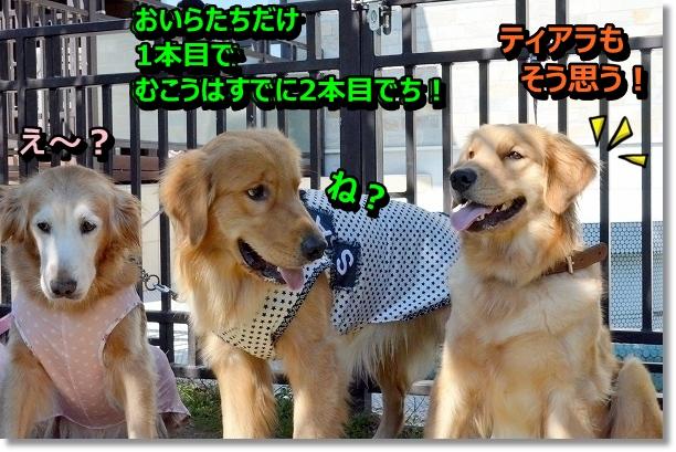 DSC_9908.jpg