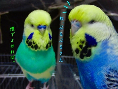 鳥さんって身体が柔らかい5